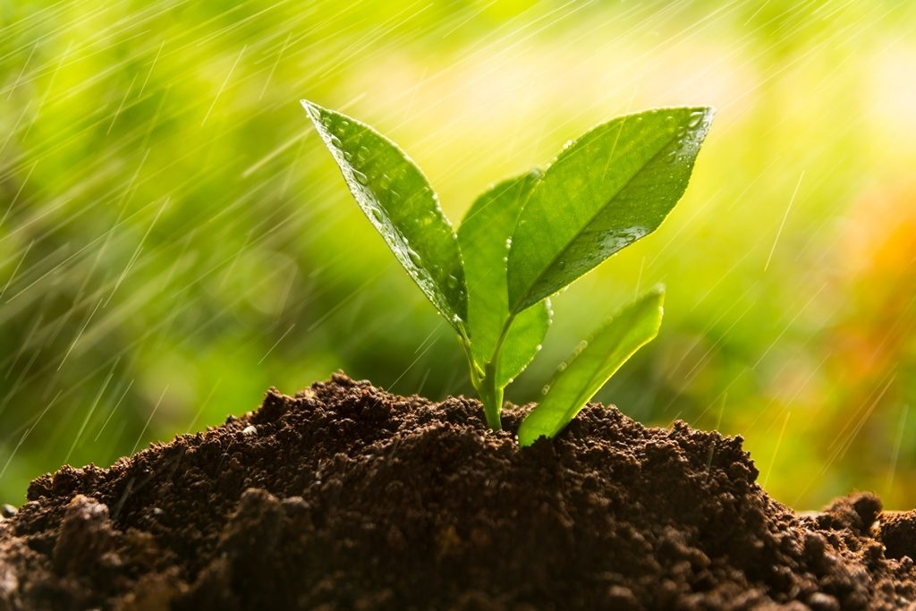 green-burial-environmentally-friendly