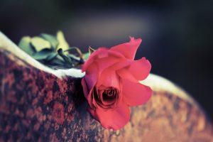 Red rose on grave marker